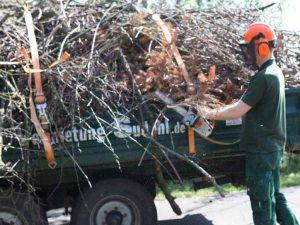 Messdiener sammeln Schnittgut für das Osterfeuer.